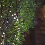 Plant lighting arrangement